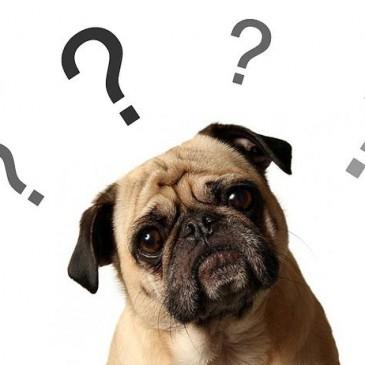 O que você precisa saber antes de adotar um animal?