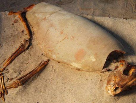 Antigo cemitério para animais de estimação é encontrado no Egito